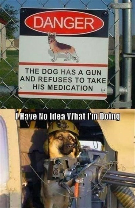 dogs guns funny signs