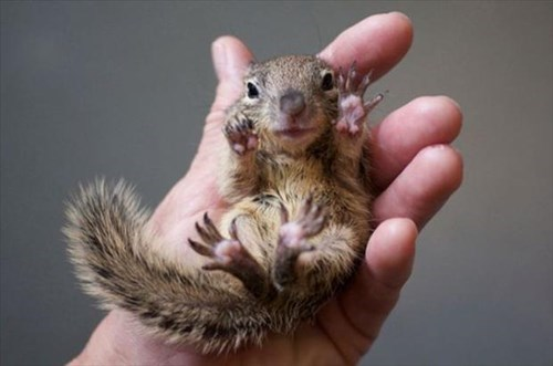 Babies cute hold squirrels - 7965700096
