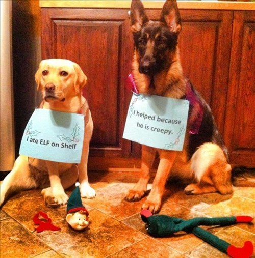 cute dogs christmas funny crime elf on a shelf - 7965702656