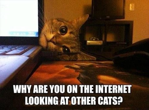 Cats,internet,trouble