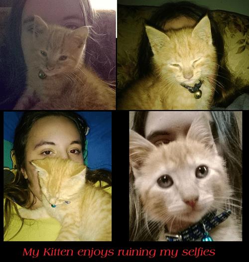 Cats kitten photobomb selfie - 7965721600