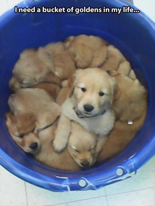 bucket cute dogs puppies life - 7965736192