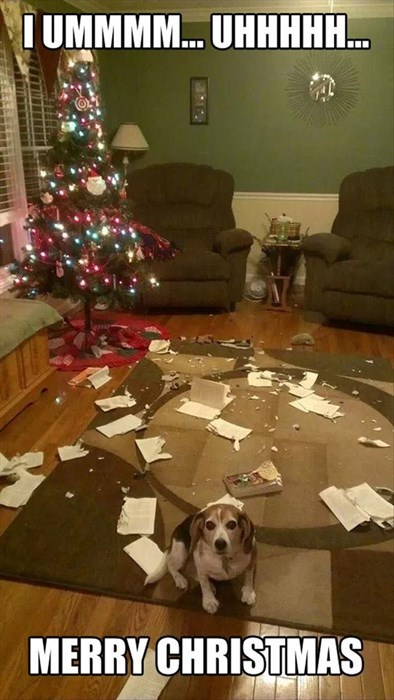 cute dogs christmas wreck the halls - 7965762560