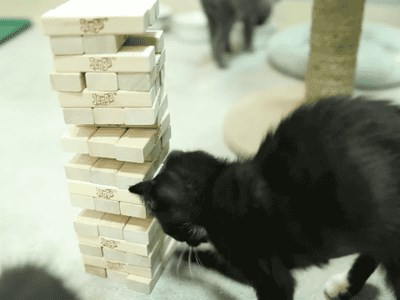 They Named Him Jenga After That