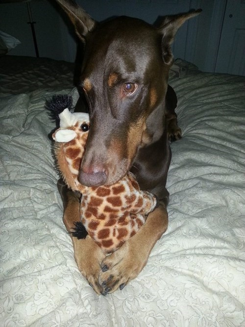 cute dogs snuggle scared - 7965779200