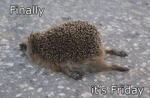 cute FRIDAY tired hedgehods - 7965808128