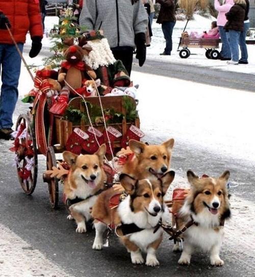 dogs corgis christmas puns paws - 7965809920