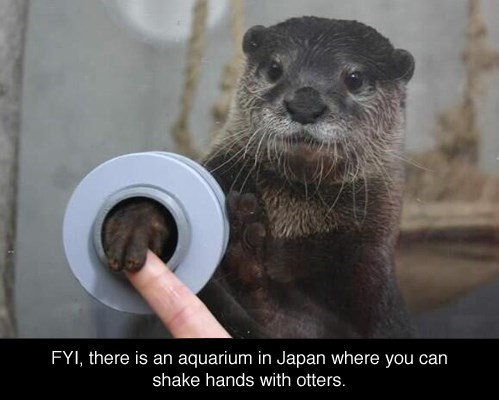 aquarium,cute,dreams,Japan,otters