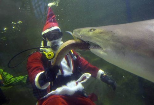 christmas,scuba,aquarium,sharks,santa