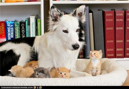 kitten cute adopted - 7966276864