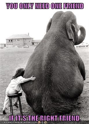 cute children elephants friendship - 7966976000