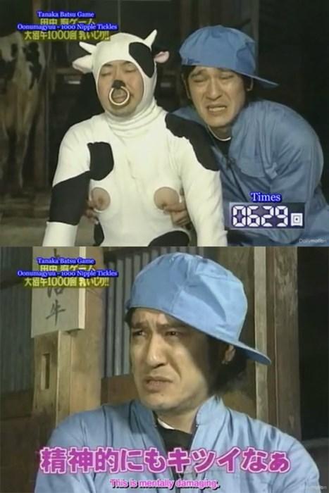 cows,Japan,wtf