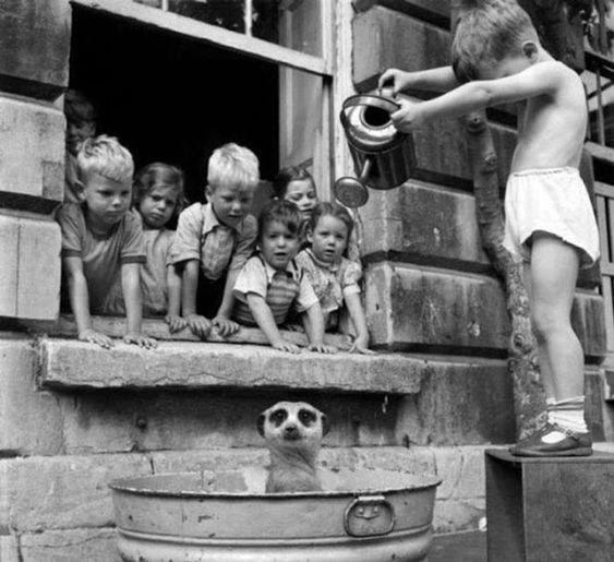 black and white photo of kid watering a meerkat