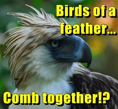 birds,eagles,funny,feathers,comb