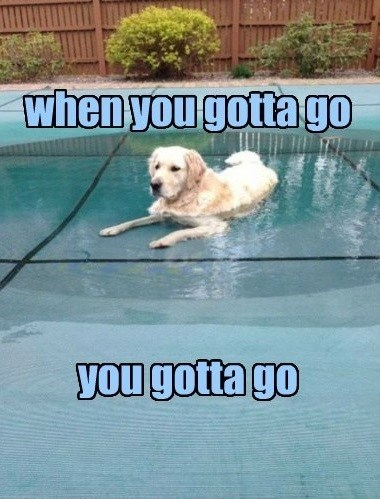 dogs,cold,pee,swim,pool