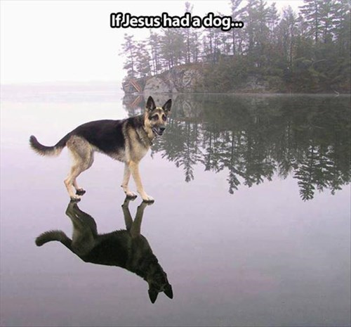 dogs,miracle,funny,jesus,water