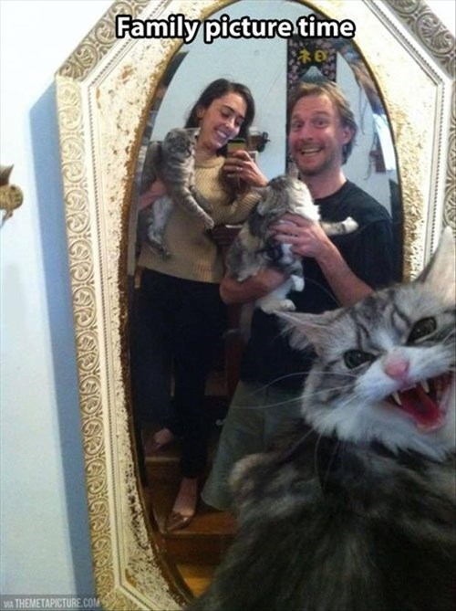 angry Cats cute funny picture - 7968815616