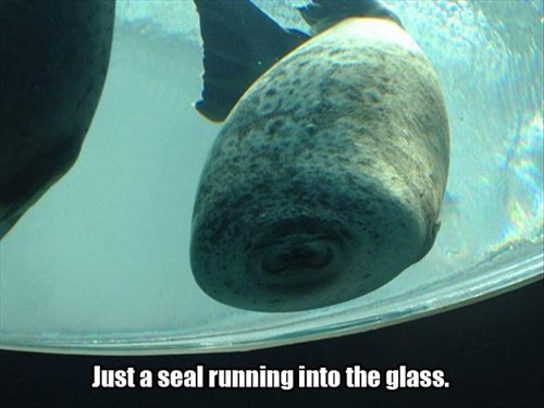 aquarium blubber glass funny seals - 7968818688