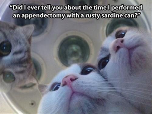 Cats funny surgery vets - 7968834816
