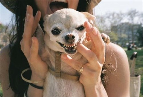 dogs bite funny pictures - 7968849408