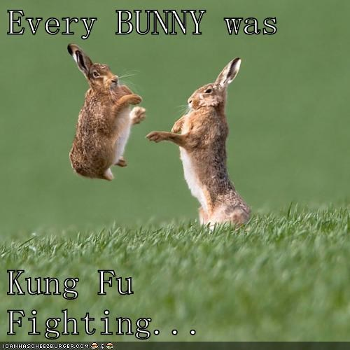 bunnies funny puns Music - 7969023232