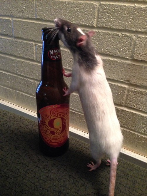 beer crunk critters funny rats - 7969167616