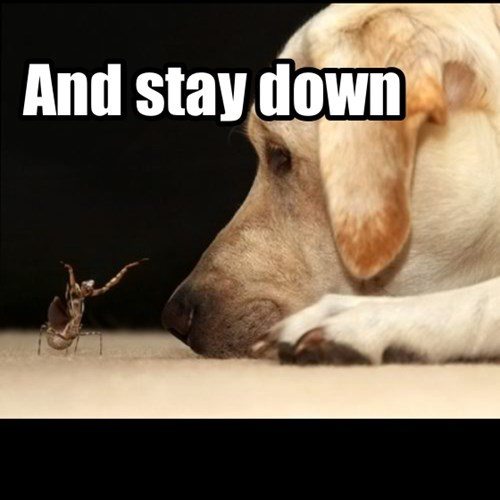 bugs,down,dogs,boss,funny