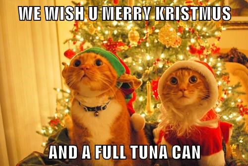 Good Tidings We Bring to You and Your Kitten