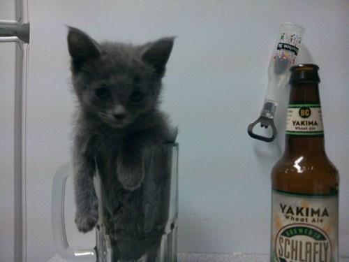 beer cat funny pint - 7969955072