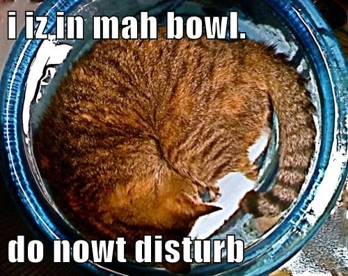 Cats cute bowl sleep - 7970017536