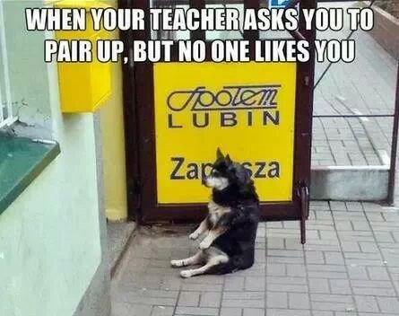 alone,dogs,funny,teachers,pair up