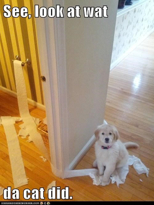 Cats,cute,dogs,funny,puppies,toilet paper