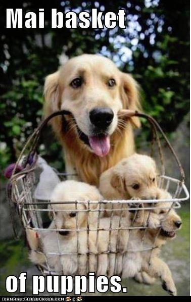 basket cute dogs puppies - 7970147328