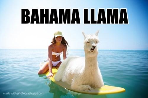 llama,surfing,funny,bahamas
