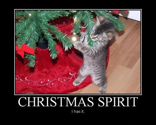 cat,christmas,christmas tree,destruction,funny