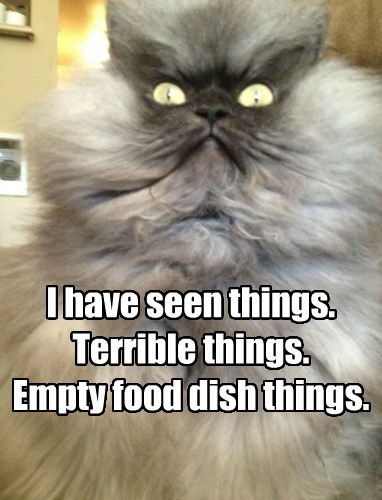 Cats,colonel meow,funny,shudder