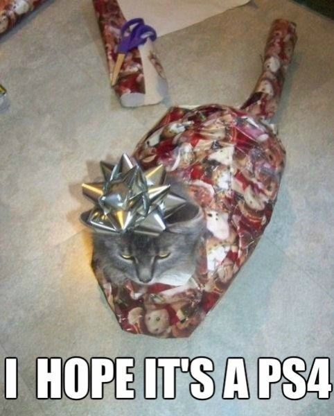 Cats,claws,christmas,presents
