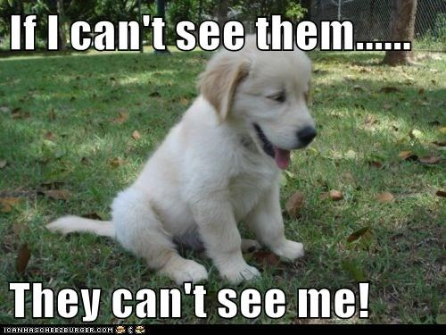 cute dogs logic puppies hide