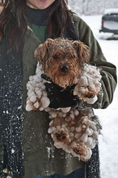 cute dogs snow play worth it snowball - 7970335232