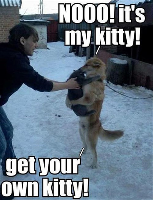 Cats cute dogs snow hug love - 7970343680