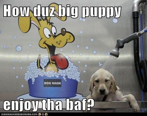 bath cute funny puppies - 7970358528