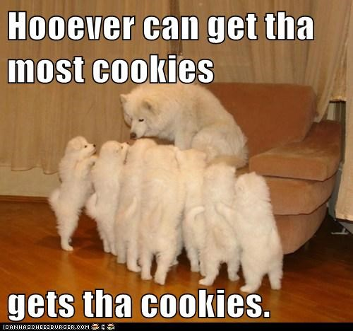 cookies,dogs,funny,puppies