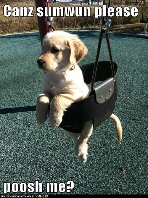 cute push swing puppy