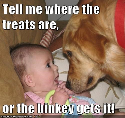 Babies binky dogs funny treats