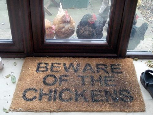 chickens,there I fixed it,warnings,welcome mat