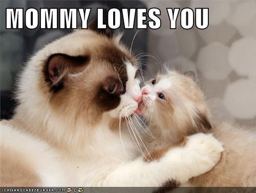 Cats kitten KISS love - 7974030592