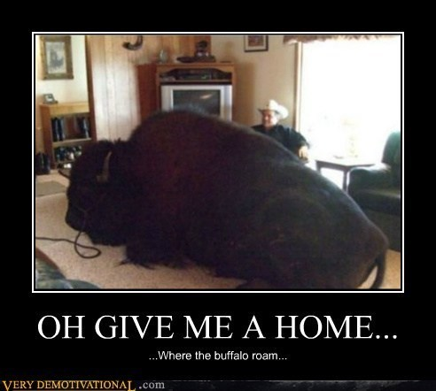 buffalo home funny song living room - 7974035456
