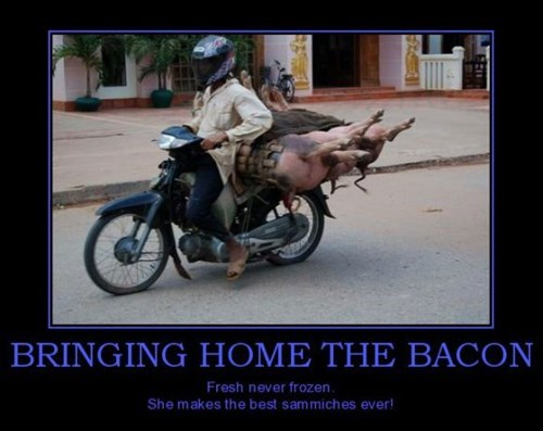 bacon,hilarious,motorcycle,funny