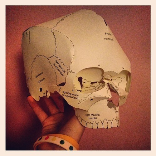 funny science paper craft skull - 7974166272