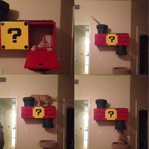 cat tree,Cats,creative,funny,Super Mario bros